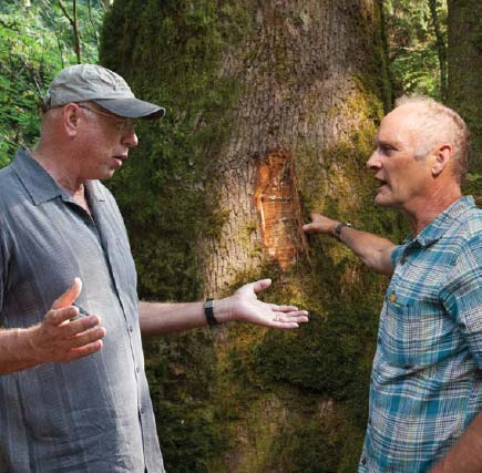 Bob with Steve McMinn in front of a maple tree in which a section of bark was removed to look for evidence of figure. Even if figure is discovered, there is no guarantee that it will be prevalent throughout the entire tree