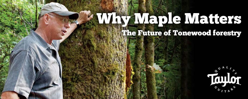 Why Maple Matters - The Future of Tonewood forestry