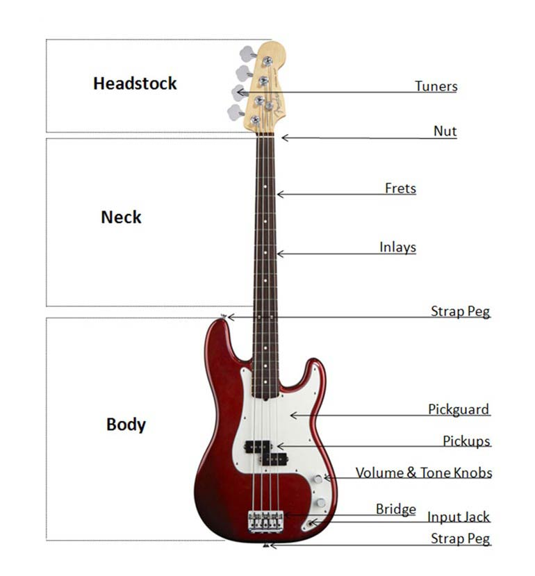 Bass Buyers Guide At Americanmusical Com