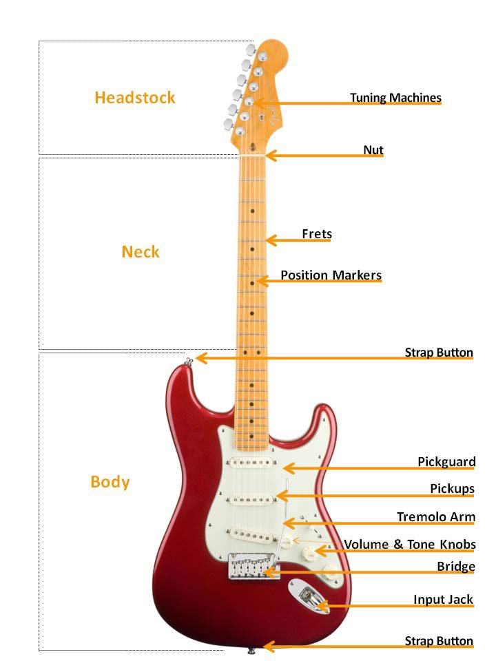 Taylor guitar diagram wiring library electric guitar buyers guide americanmusical com rh americanmusical com bass guitar diagram taylor t5 wiring diagram guitar asfbconference2016 Images